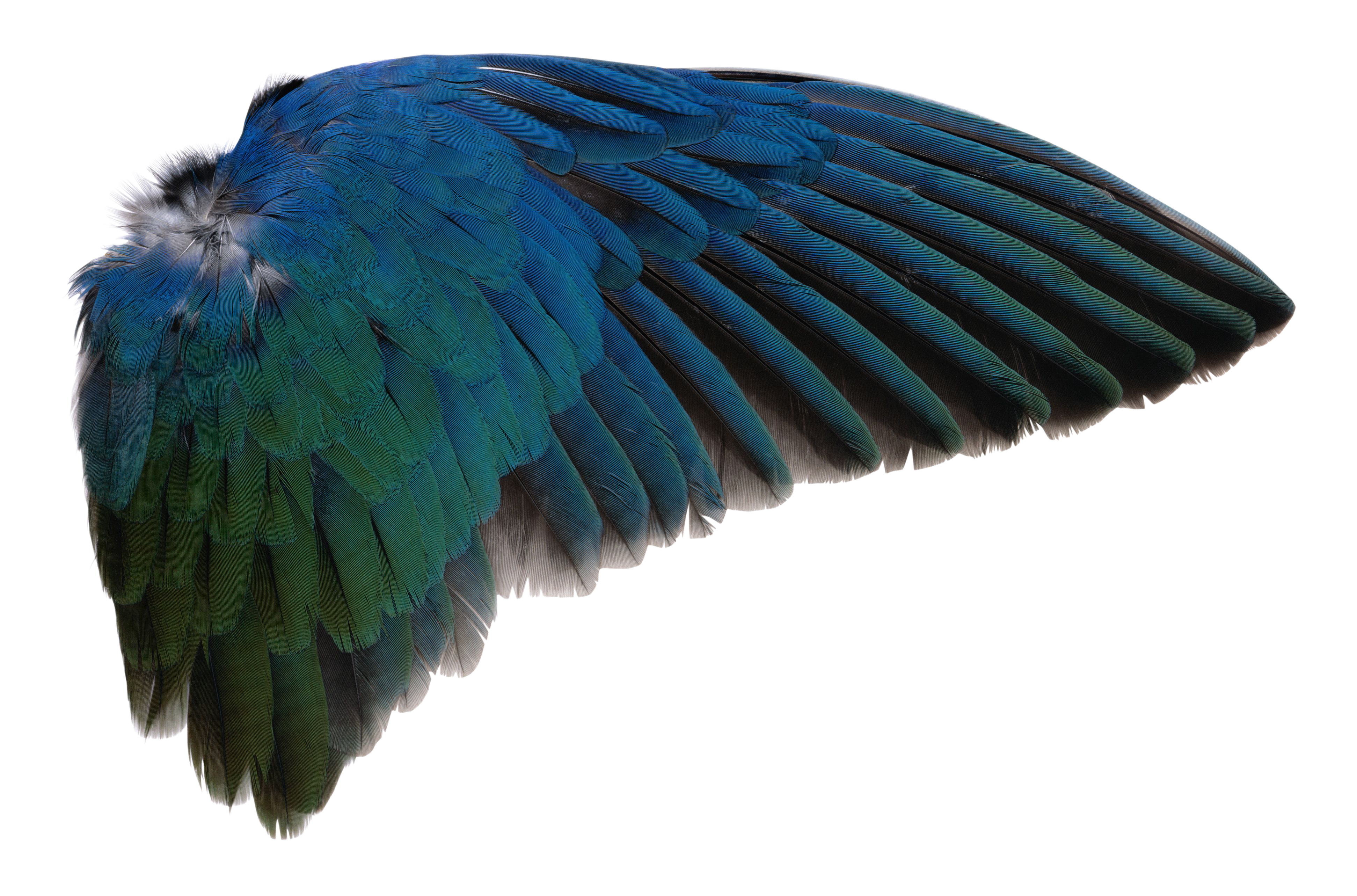 Wing_PNG_by_AbsurdWordPreferred